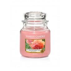 Свеча средняя в стеклянной банке Солнечная абрикосовая роза Sun-drenched apricot rose  411 гр / 65-90 часов 1577134E